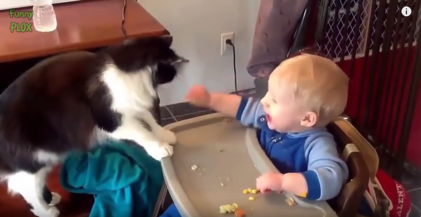 cute_cat_and_dog_babies_comp_1